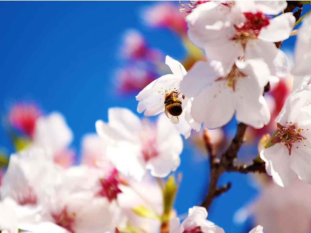 Spring-Scene-Wallpaper-1024x768.jpg